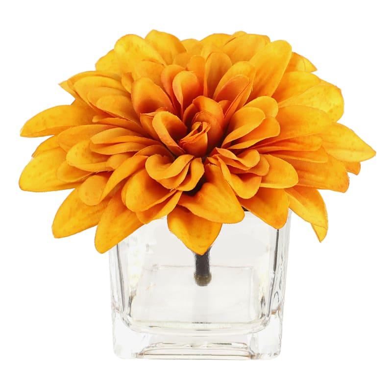 Orange Dahlias in Glass Vase
