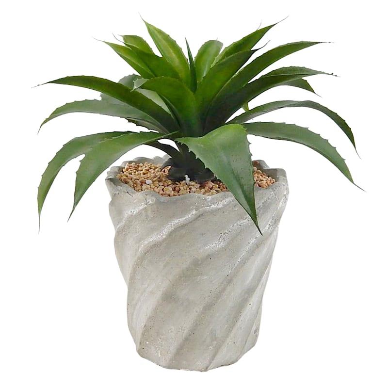 11in. Succulent In Pot