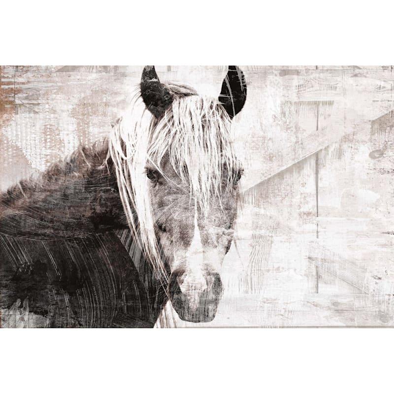 36X24 Horse Portrait Canvas
