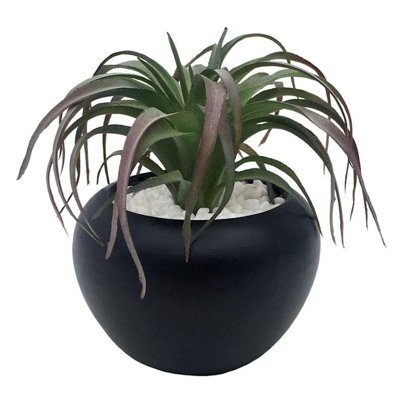 4in. Succulent In Black Pot