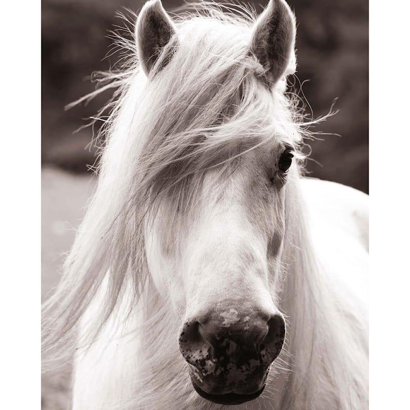 16X20 Horse Portrait Canvas Art