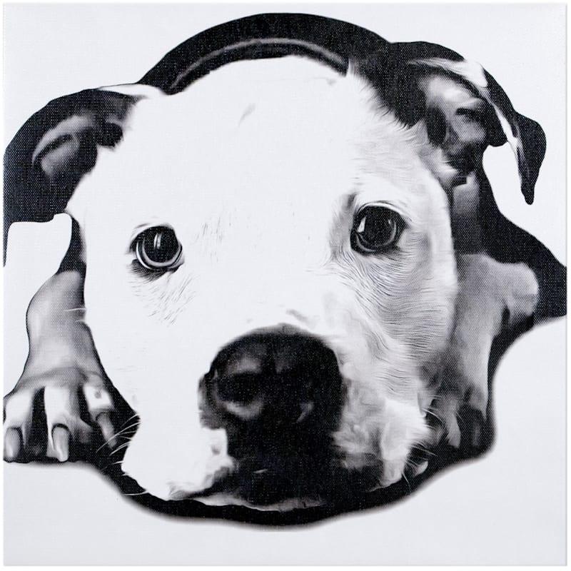 12X12 Black/White Pitbull Dog Canvas Wall Art