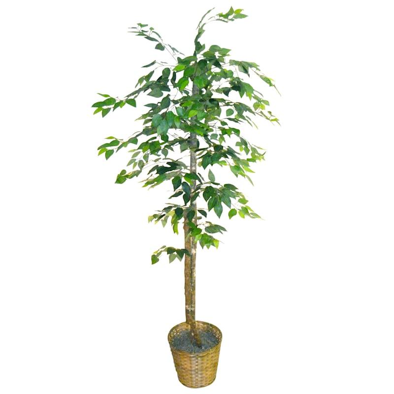 Green Ficus Tree 78 In