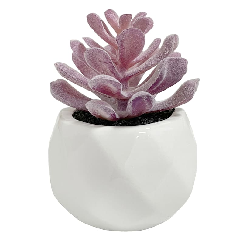 Violet Succulent in White Pot, 3in