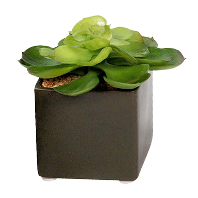 4in. Succulent In Ceramic