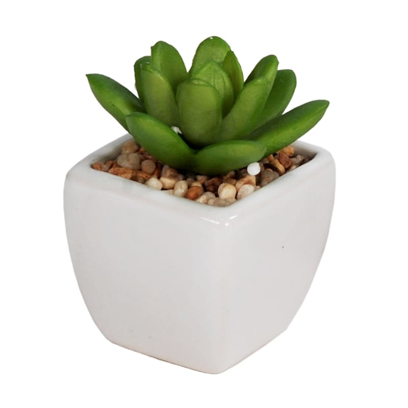 S3 Succulents In Pac Box