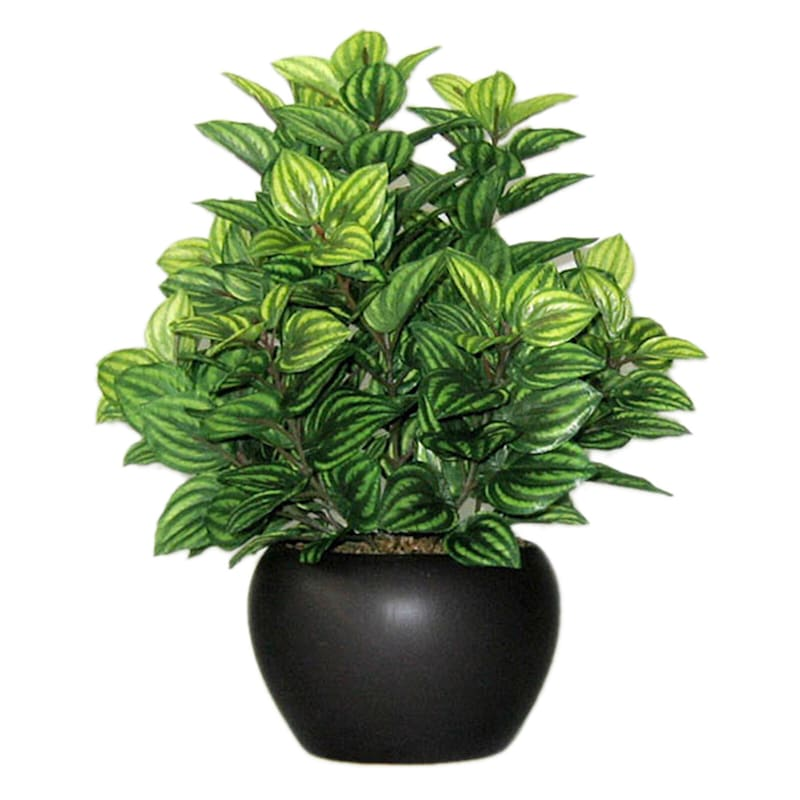 10in. Potted Greenery Assorted